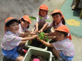 野菜の苗植えをしました!!(年長組)